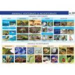 Plansa. Animale vertebrate si nevertebrate - Florica Alexandrescu