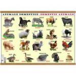 Plansa animale domestice / animale salbatice, plastifiata cu agatatoare