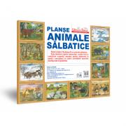 Mapa. Animale salbatice - Planse