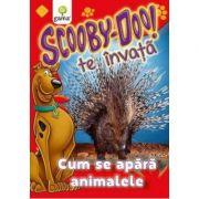 Scooby-Doo te invata! - Cum se apara animalele