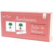 Lecti Montessori - Lectii de botanica