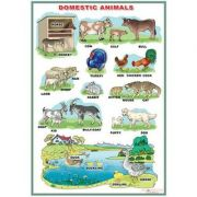 Domestic Animals / Wild animals (DUO) - Plansa viu colorata, cu 2 teme distincte