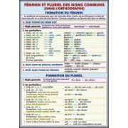 Plansa dubla - Feminin et pluriel des noms communs/ L'Article Partitif (FP1)