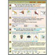 Ortografierea grupurilor: ghe/ ge si ghi/ gi \ Substantivul (DUO) - Plansa cu 2 teme distincte (CP15)