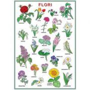 Plansa - Flori