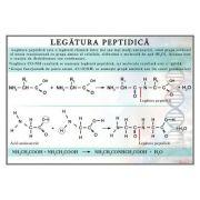 Plansa - Legatura peptidica (CH20)