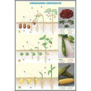 Plansa dubla - Germinatia semintelor/ Briophytha