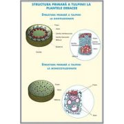 Plansa dubla - Structura tulpinei la plantele erbacee/ Regnul ciupercilor