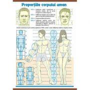 Plansa dubla - Proportiile corpului uman/ Contrastele cromatice (AP5)