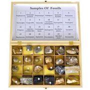 Set - 24 de fosile