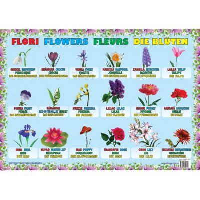 Flori - Plansa educativa