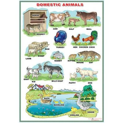 Domestic Animals / Wild animals (DUO) - Plansa viu colorata, cu 2 teme distincte