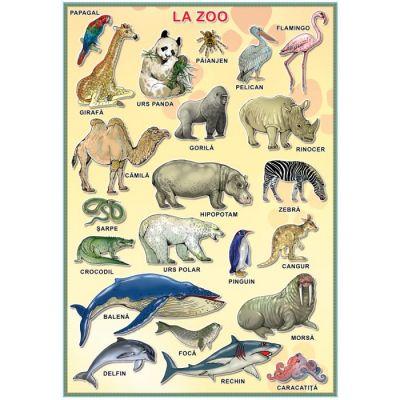 Plansa - La Zoo